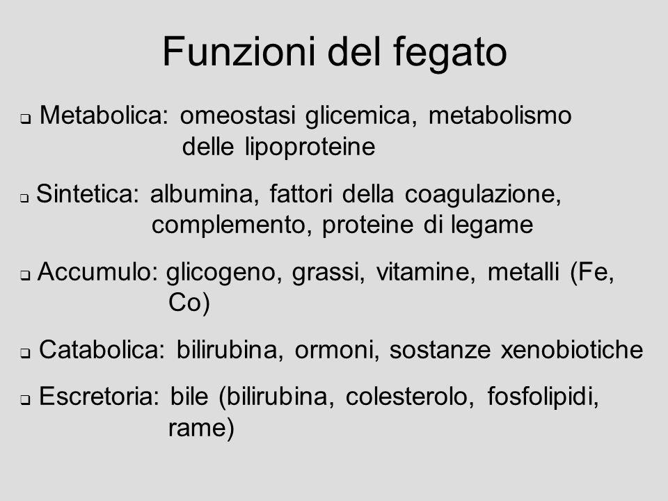 Funzioni del fegato Metabolica: omeostasi glicemica, metabolismo delle lipoproteine Sintetica: albumina, fattori della coagulazione, complemento, proteine di legame Accumulo: glicogeno, grassi, vitamine, metalli (Fe, Co) Catabolica: bilirubina, ormoni, sostanze xenobiotiche Escretoria: bile (bilirubina, colesterolo, fosfolipidi, rame)