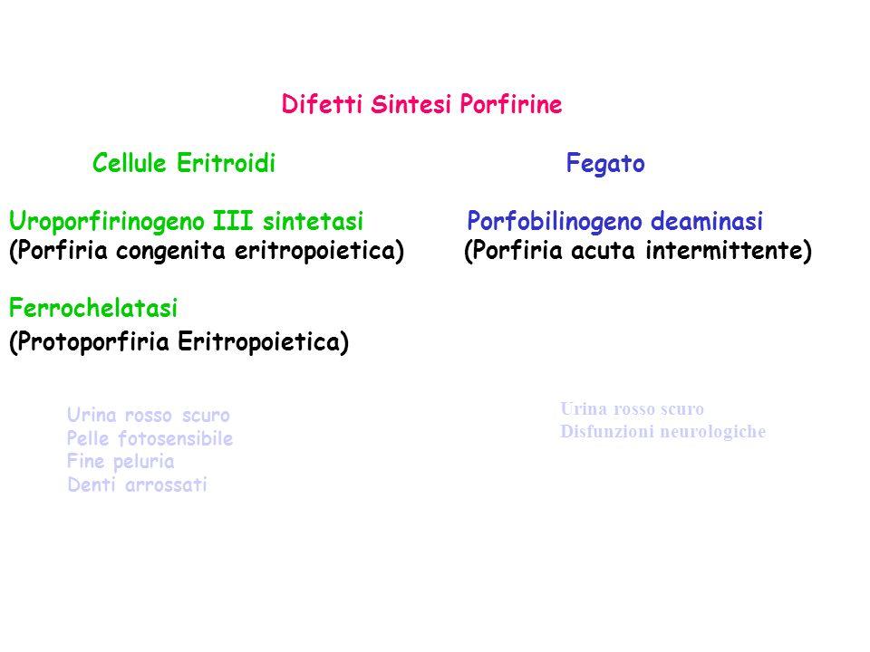 Difetti Sintesi Porfirine Cellule Eritroidi Fegato Uroporfirinogeno III sintetasi Porfobilinogeno deaminasi (Porfiria congenita eritropoietica) (Porfi