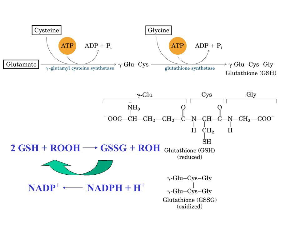 2 GSH + ROOH GSSG + ROH NADP + NADPH + H +