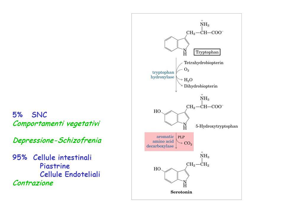 5% SNC Comportamenti vegetativi Depressione-Schizofrenia 95% Cellule intestinali Piastrine Cellule Endoteliali Contrazione
