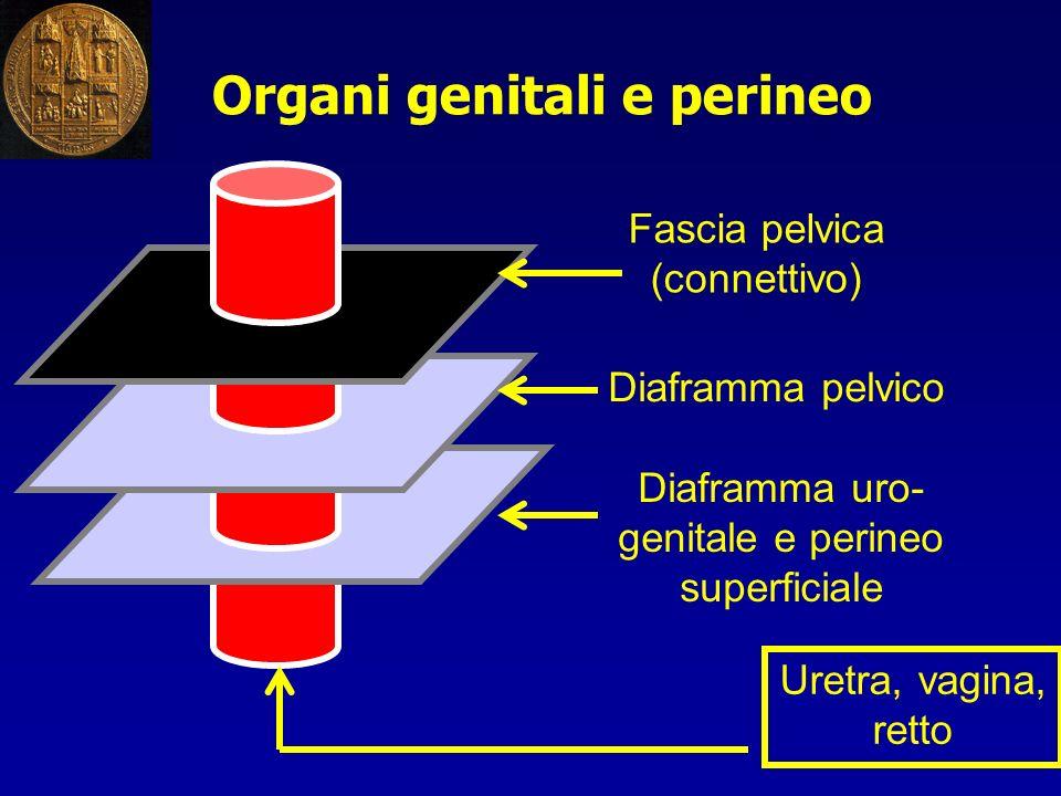 Organi genitali e perineo Fascia pelvica (connettivo) Diaframma pelvico Uretra, vagina, retto Diaframma uro- genitale e perineo superficiale