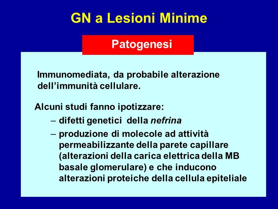 GN a Lesioni Minime Immunomediata, da probabile alterazione dellimmunità cellulare. Alcuni studi fanno ipotizzare: –difetti genetici della nefrina –pr