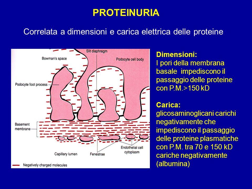 1)Aumentata escrezione urinaria (> 3,5 g / 24h) 2) Inadeguata sintesi epatica (v.n.