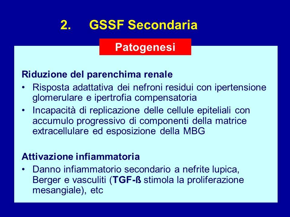 2. GSSF Secondaria Riduzione del parenchima renale Risposta adattativa dei nefroni residui con ipertensione glomerulare e ipertrofia compensatoria Inc