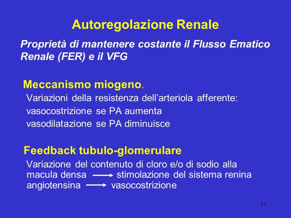 13 Autoregolazione Renale Meccanismo miogeno. Variazioni della resistenza dellarteriola afferente: vasocostrizione se PA aumenta vasodilatazione se PA