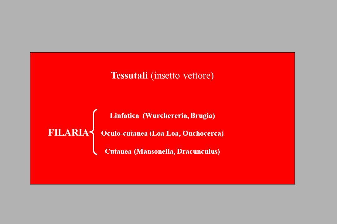 Enterobius vermicularis (Ossiuriasi) Ciclo vitale Prurito perianale (in specie notturno), lesioni da grattamento.