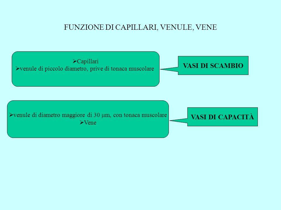 FUNZIONE DI CAPILLARI, VENULE, VENE Capillari venule di piccolo diametro, prive di tonaca muscolare VASI DI SCAMBIO venule di diametro maggiore di 30