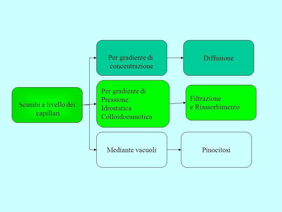 Scambi a livello dei capillari Per gradiente di Pressione: Idrostatica Colloidoosmotica Per gradiente di concentrazione Mediante vacuoliPinocitosi Fil