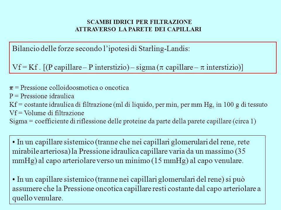 SCAMBI IDRICI PER FILTRAZIONE ATTRAVERSO LA PARETE DEI CAPILLARI Il bilancio delle forze secondo lipotesi di Starling-Landis ci fa prevedere, assumendo valori di: Pressione idraulica media nel capillare sistemico di circa 20 mm Hg Pressione oncotica del plasma di 28 mm Hg una filtrazione netta allestremo arteriolare del capillare sistemico un riassorbimento netto allestremo venulare del 85% del liquido filtrato.