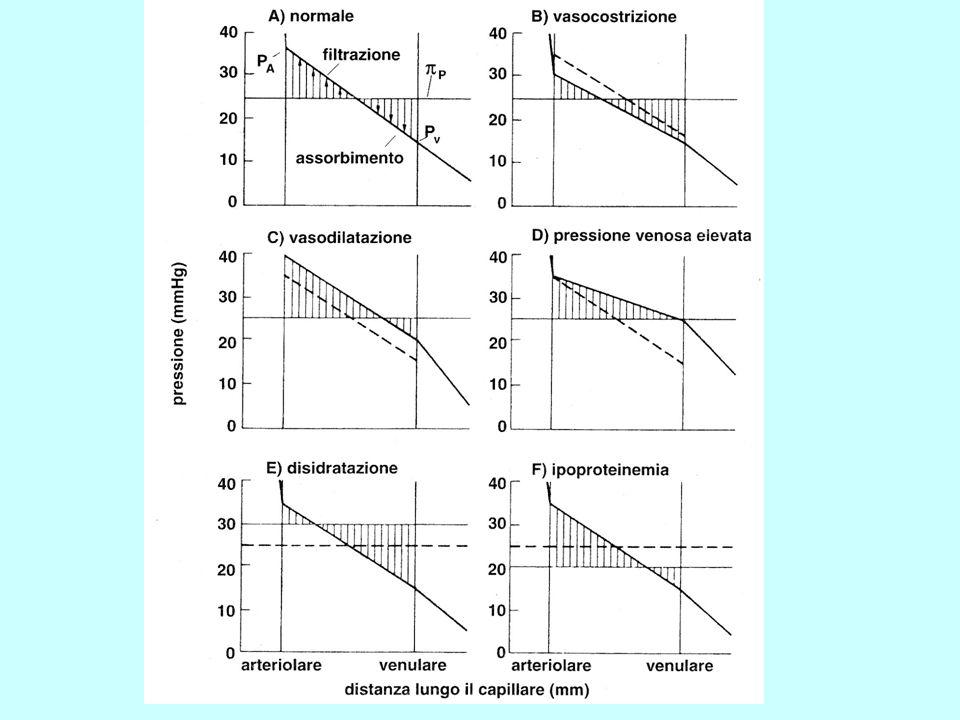 Liquido di gel Liquido libero Effetto dellincremento della Pressione nellInterstizio sul Volume del liquido interstiziale totale