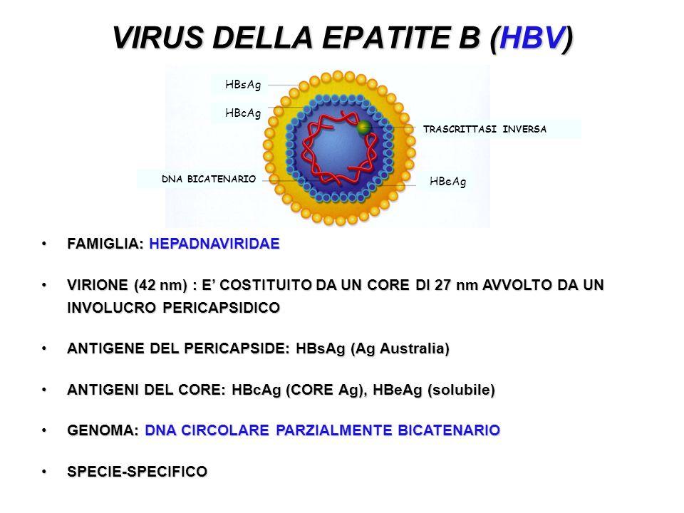 VIRUS DELLA EPATITE B (HBV) FAMIGLIA: HEPADNAVIRIDAEFAMIGLIA: HEPADNAVIRIDAE VIRIONE (42 nm) : E COSTITUITO DA UN CORE DI 27 nm AVVOLTO DA UN INVOLUCRO PERICAPSIDICOVIRIONE (42 nm) : E COSTITUITO DA UN CORE DI 27 nm AVVOLTO DA UN INVOLUCRO PERICAPSIDICO ANTIGENE DEL PERICAPSIDE: HBsAg (Ag Australia)ANTIGENE DEL PERICAPSIDE: HBsAg (Ag Australia) ANTIGENI DEL CORE: HBcAg (CORE Ag), HBeAg (solubile)ANTIGENI DEL CORE: HBcAg (CORE Ag), HBeAg (solubile) GENOMA: DNA CIRCOLARE PARZIALMENTE BICATENARIOGENOMA: DNA CIRCOLARE PARZIALMENTE BICATENARIO SPECIE-SPECIFICOSPECIE-SPECIFICO HBsAg TRASCRITTASI INVERSA DNA BICATENARIO HBcAg HBeAg