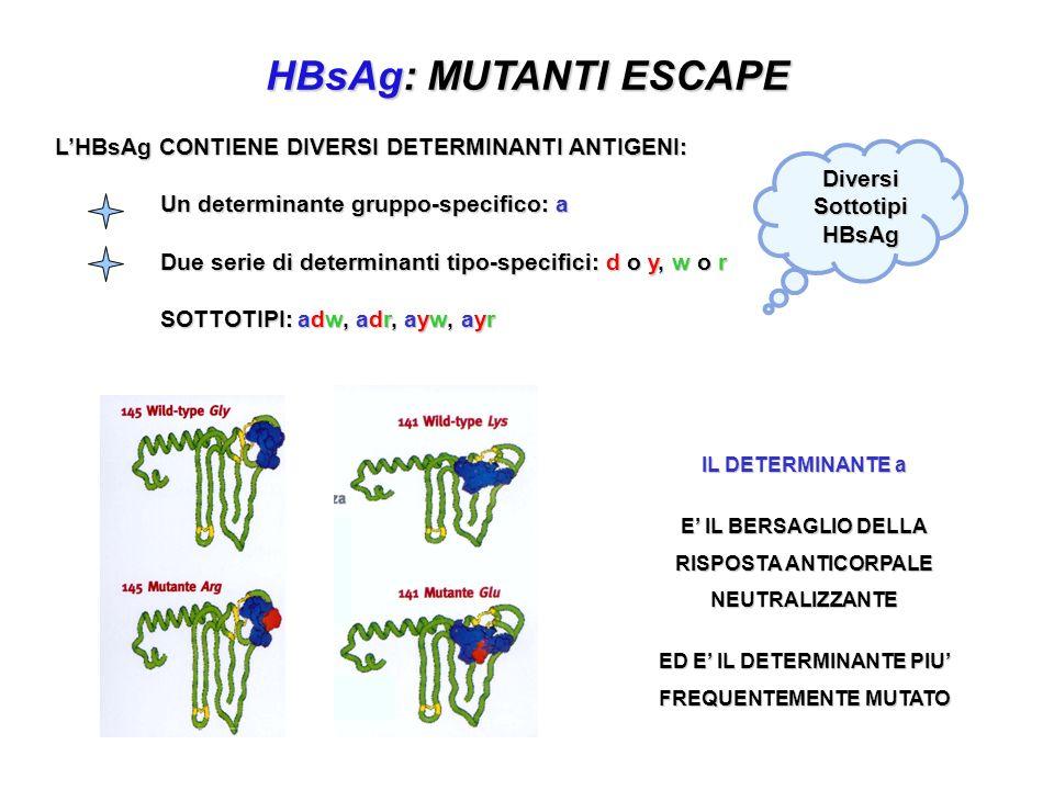 LHBsAg CONTIENE DIVERSI DETERMINANTI ANTIGENI: Un determinante gruppo-specifico: a Due serie di determinanti tipo-specifici: d o y, w o r SOTTOTIPI: a
