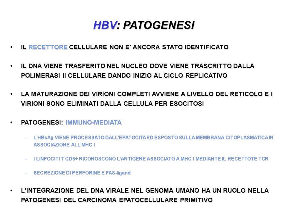 HBV: PATOGENESI IL RECETTORE CELLULARE NON E ANCORA STATO IDENTIFICATOIL RECETTORE CELLULARE NON E ANCORA STATO IDENTIFICATO IL DNA VIENE TRASFERITO NEL NUCLEO DOVE VIENE TRASCRITTO DALLA POLIMERASI II CELLULARE DANDO INIZIO AL CICLO REPLICATIVOIL DNA VIENE TRASFERITO NEL NUCLEO DOVE VIENE TRASCRITTO DALLA POLIMERASI II CELLULARE DANDO INIZIO AL CICLO REPLICATIVO LA MATURAZIONE DEI VIRIONI COMPLETI AVVIENE A LIVELLO DEL RETICOLO E I VIRIONI SONO ELIMINATI DALLA CELLULA PER ESOCITOSILA MATURAZIONE DEI VIRIONI COMPLETI AVVIENE A LIVELLO DEL RETICOLO E I VIRIONI SONO ELIMINATI DALLA CELLULA PER ESOCITOSI PATOGENESI: IMMUNO-MEDIATAPATOGENESI: IMMUNO-MEDIATA –LHBcAg VIENE PROCESSATO DALLEPATOCITA ED ESPOSTO SULLA MEMBRANA CITOPLASMATICA IN ASSOCIAZIONE ALLMHC I –I LINFOCITI T CD8+ RICONOSCONO LANTIGENE ASSOCIATO A MHC I MEDIANTE IL RECETTOTE TCR –SECREZIONE DI PERFORINE E FAS-ligand LINTEGRAZIONE DEL DNA VIRALE NEL GENOMA UMANO HA UN RUOLO NELLA PATOGENESI DEL CARCINOMA EPATOCELLULARE PRIMITIVOLINTEGRAZIONE DEL DNA VIRALE NEL GENOMA UMANO HA UN RUOLO NELLA PATOGENESI DEL CARCINOMA EPATOCELLULARE PRIMITIVO