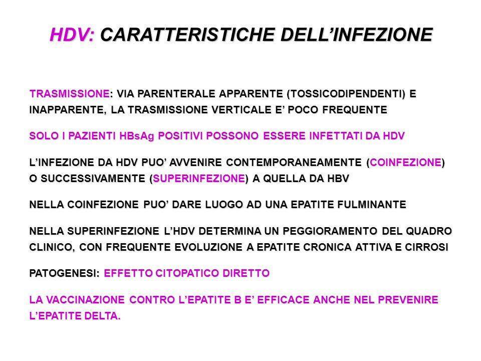 HDV: CARATTERISTICHE DELLINFEZIONE TRASMISSIONE: VIA PARENTERALE APPARENTE (TOSSICODIPENDENTI) E INAPPARENTE, LA TRASMISSIONE VERTICALE E POCO FREQUENTE SOLO I PAZIENTI HBsAg POSITIVI POSSONO ESSERE INFETTATI DA HDV LINFEZIONE DA HDV PUO AVVENIRE CONTEMPORANEAMENTE (COINFEZIONE) O SUCCESSIVAMENTE (SUPERINFEZIONE) A QUELLA DA HBV NELLA COINFEZIONE PUO DARE LUOGO AD UNA EPATITE FULMINANTE NELLA SUPERINFEZIONE LHDV DETERMINA UN PEGGIORAMENTO DEL QUADRO CLINICO, CON FREQUENTE EVOLUZIONE A EPATITE CRONICA ATTIVA E CIRROSI PATOGENESI: EFFETTO CITOPATICO DIRETTO LA VACCINAZIONE CONTRO LEPATITE B E EFFICACE ANCHE NEL PREVENIRE LEPATITE DELTA.