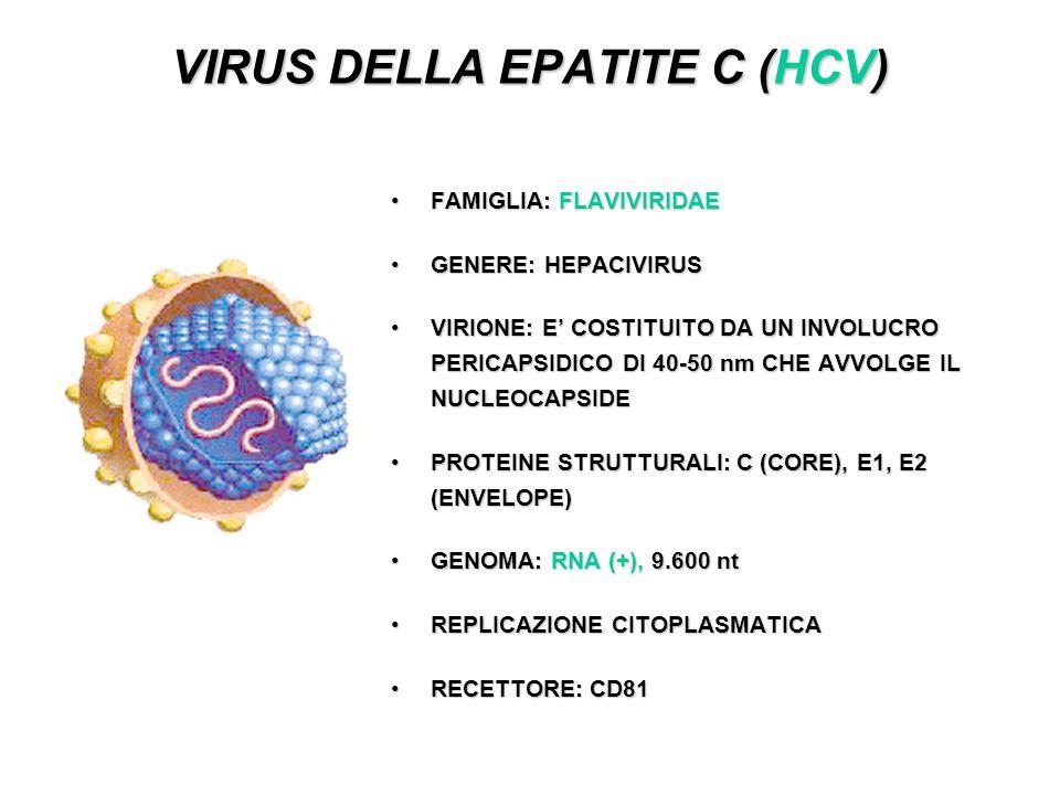 VIRUS DELLA EPATITE C (HCV) FAMIGLIA: FLAVIVIRIDAEFAMIGLIA: FLAVIVIRIDAE GENERE: HEPACIVIRUSGENERE: HEPACIVIRUS VIRIONE: E COSTITUITO DA UN INVOLUCRO