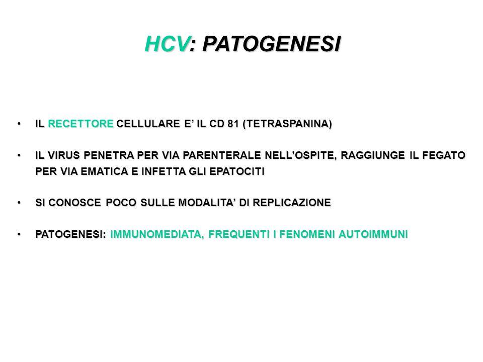 HCV: PATOGENESI IL RECETTORE CELLULARE E IL CD 81 (TETRASPANINA)IL RECETTORE CELLULARE E IL CD 81 (TETRASPANINA) IL VIRUS PENETRA PER VIA PARENTERALE NELLOSPITE, RAGGIUNGE IL FEGATO PER VIA EMATICA E INFETTA GLI EPATOCITIIL VIRUS PENETRA PER VIA PARENTERALE NELLOSPITE, RAGGIUNGE IL FEGATO PER VIA EMATICA E INFETTA GLI EPATOCITI SI CONOSCE POCO SULLE MODALITA DI REPLICAZIONESI CONOSCE POCO SULLE MODALITA DI REPLICAZIONE PATOGENESI: IMMUNOMEDIATA, FREQUENTI I FENOMENI AUTOIMMUNIPATOGENESI: IMMUNOMEDIATA, FREQUENTI I FENOMENI AUTOIMMUNI