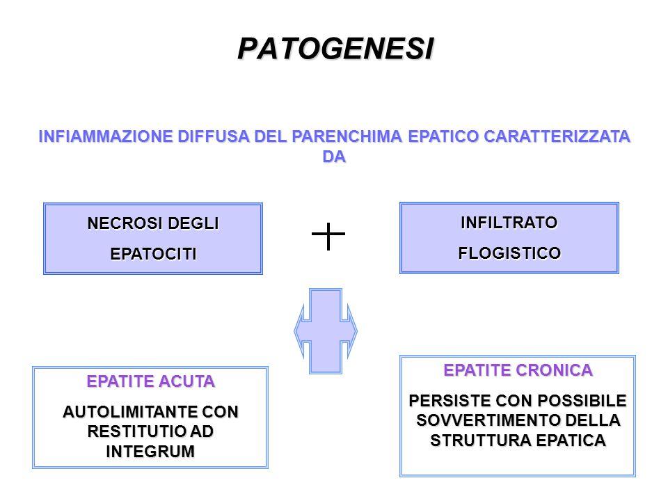 PATOGENESI INFIAMMAZIONE DIFFUSA DEL PARENCHIMA EPATICO CARATTERIZZATA DA NECROSI DEGLI EPATOCITI INFILTRATOFLOGISTICO EPATITE ACUTA AUTOLIMITANTE CON RESTITUTIO AD INTEGRUM EPATITE CRONICA PERSISTE CON POSSIBILE SOVVERTIMENTO DELLA STRUTTURA EPATICA