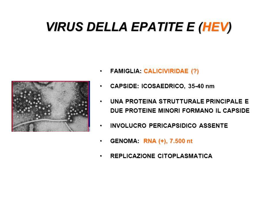 VIRUS DELLA EPATITE E (HEV) FAMIGLIA: CALICIVIRIDAE (?)FAMIGLIA: CALICIVIRIDAE (?) CAPSIDE: ICOSAEDRICO, 35-40 nmCAPSIDE: ICOSAEDRICO, 35-40 nm UNA PROTEINA STRUTTURALE PRINCIPALE E DUE PROTEINE MINORI FORMANO IL CAPSIDEUNA PROTEINA STRUTTURALE PRINCIPALE E DUE PROTEINE MINORI FORMANO IL CAPSIDE INVOLUCRO PERICAPSIDICO ASSENTEINVOLUCRO PERICAPSIDICO ASSENTE GENOMA: RNA (+), 7.500 ntGENOMA: RNA (+), 7.500 nt REPLICAZIONE CITOPLASMATICAREPLICAZIONE CITOPLASMATICA