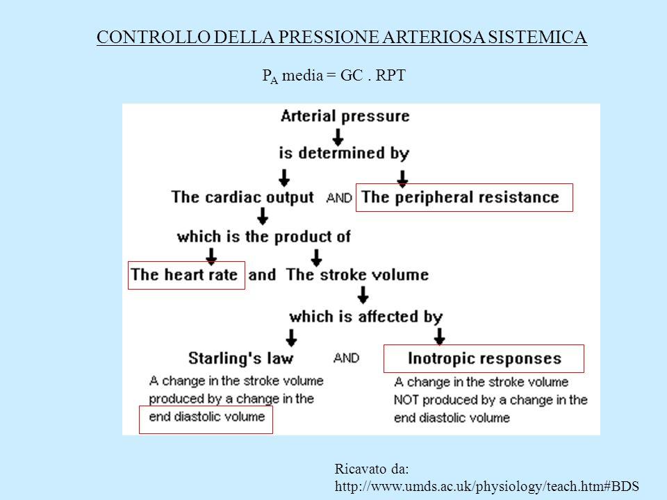 Ricavato da: http://www.umds.ac.uk/physiology/teach.htm#BDS CONTROLLO DELLA PRESSIONE ARTERIOSA SISTEMICA P A media = GC. RPT