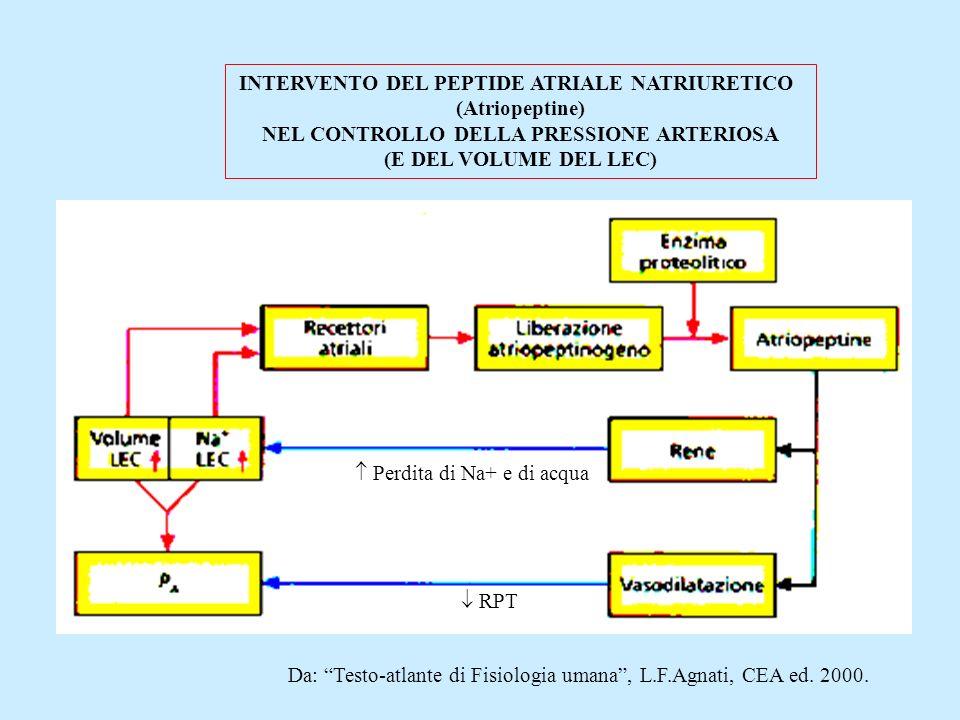 Perdita di Na+ e di acqua RPT INTERVENTO DEL PEPTIDE ATRIALE NATRIURETICO (Atriopeptine) NEL CONTROLLO DELLA PRESSIONE ARTERIOSA (E DEL VOLUME DEL LEC