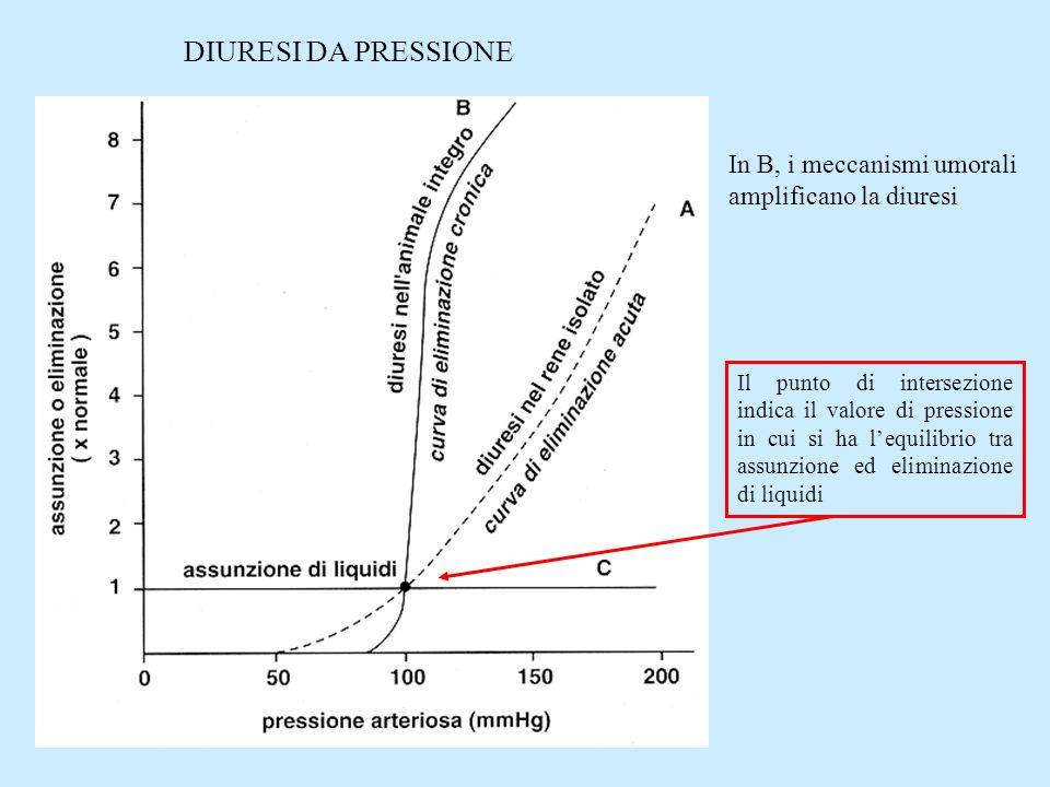 In B, i meccanismi umorali amplificano la diuresi DIURESI DA PRESSIONE Il punto di intersezione indica il valore di pressione in cui si ha lequilibrio