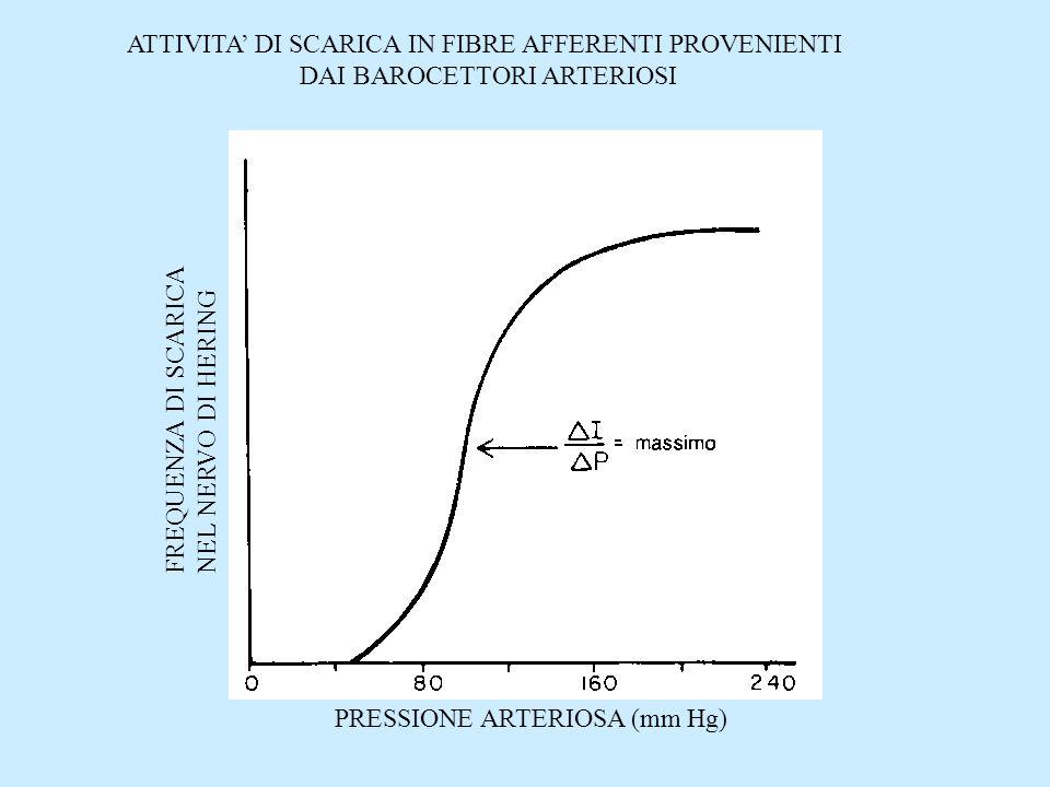 Renina = vasocostrizione dovuta a renina-angiotensina Rene = diuresi da pressione EFFICACIA E RAPIDITA DI AZIONE DEI DIVERSI MECCANISMI DI REGOLAZIONE DELLA PRESSIONE ARTERIOSA