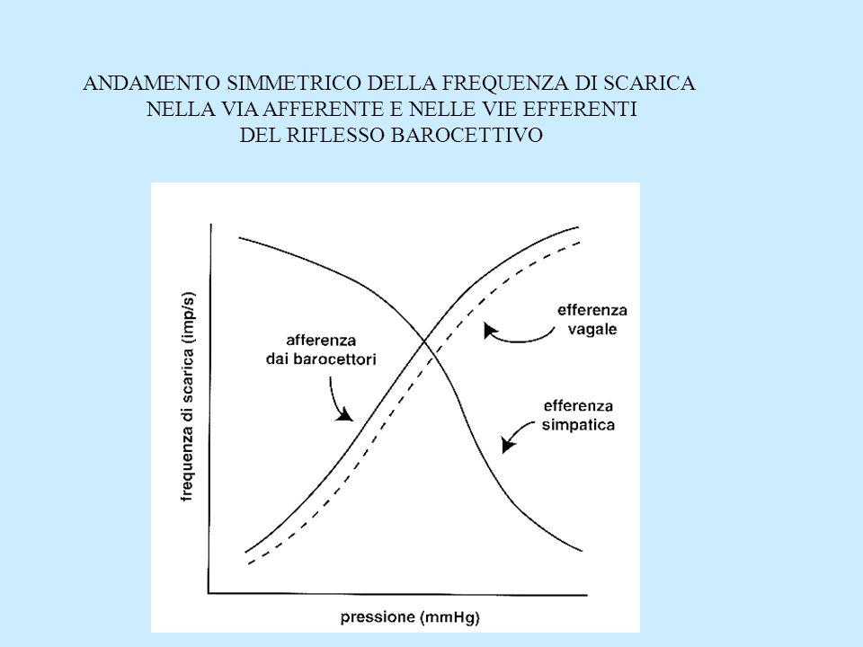 ANDAMENTO SIMMETRICO DELLA FREQUENZA DI SCARICA NELLA VIA AFFERENTE E NELLE VIE EFFERENTI DEL RIFLESSO BAROCETTIVO