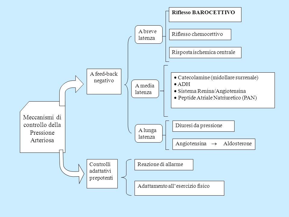 Meccanismi di controllo della Pressione Arteriosa A feed-back negativo A breve latenza A media latenza A lunga latenza Riflesso BAROCETTIVORiflesso ch