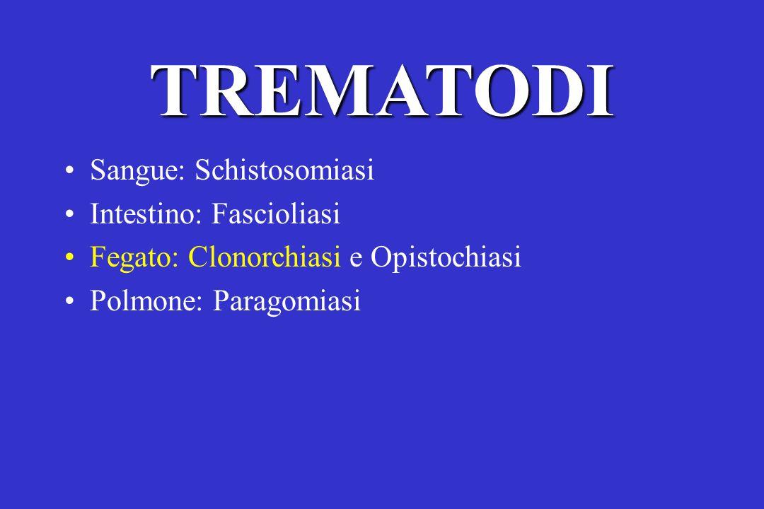 TREMATODI Sangue: Schistosomiasi Intestino: Fascioliasi Fegato: Clonorchiasi e Opistochiasi Polmone: Paragomiasi