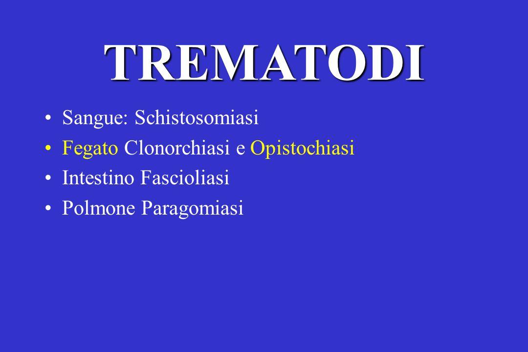 TREMATODI Sangue: Schistosomiasi Fegato Clonorchiasi e Opistochiasi Intestino Fascioliasi Polmone Paragomiasi