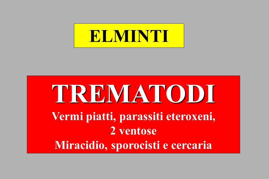 TREMATODI Vermi piatti, parassiti eteroxeni, 2 ventose Miracidio, sporocisti e cercaria ELMINTI