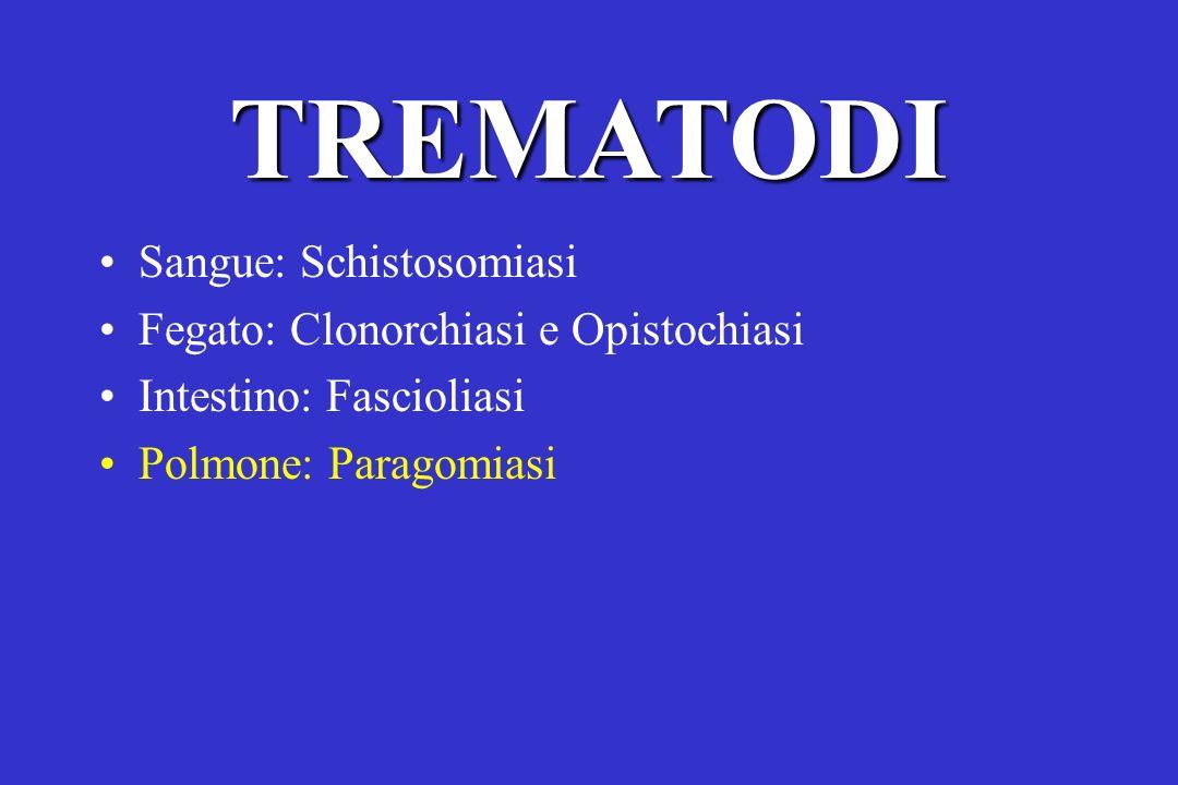 TREMATODI Sangue: Schistosomiasi Fegato: Clonorchiasi e Opistochiasi Intestino: Fascioliasi Polmone: Paragomiasi