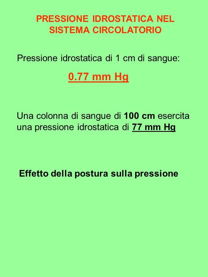 PRESSIONE IDROSTATICA NEL SISTEMA CIRCOLATORIO Pressione idrostatica di 1 cm di sangue: 0.77 mm Hg Una colonna di sangue di 100 cm esercita una pressi
