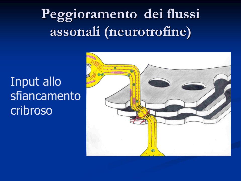 Peggioramento dei flussi assonali (neurotrofine) Input allo sfiancamento cribroso