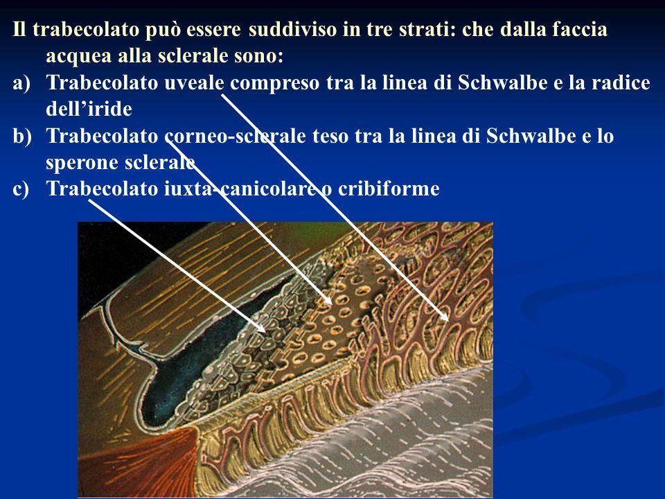 Il trabecolato può essere suddiviso in tre strati: che dalla faccia acquea alla sclerale sono: a)Trabecolato uveale compreso tra la linea di Schwalbe