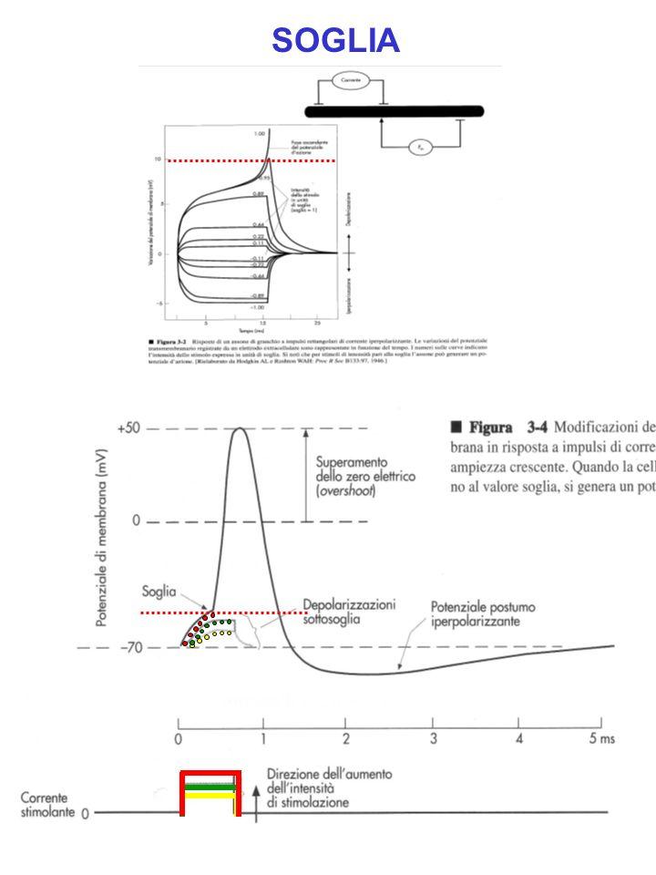 Effetto della mielinizzazione RmRm R in La guaina mielinica aumenta R m