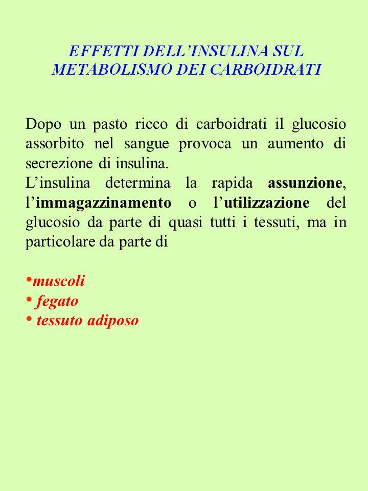 Dopo un pasto ricco di carboidrati il glucosio assorbito nel sangue provoca un aumento di secrezione di insulina. Linsulina determina la rapida assunz