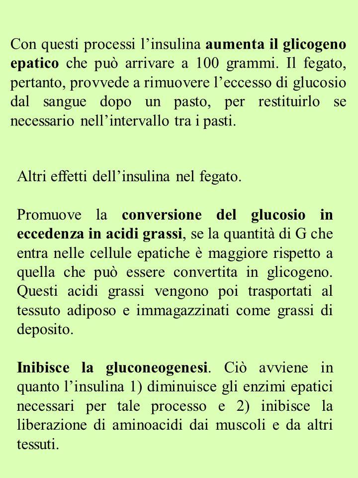 Con questi processi linsulina aumenta il glicogeno epatico che può arrivare a 100 grammi. Il fegato, pertanto, provvede a rimuovere leccesso di glucos