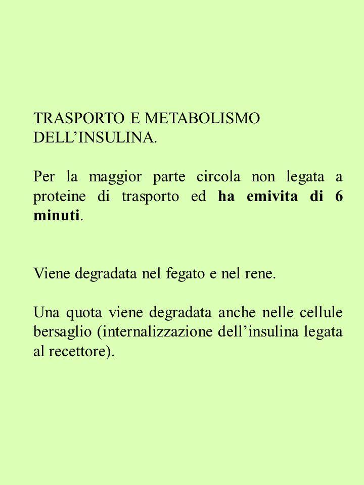 TRASPORTO E METABOLISMO DELLINSULINA.