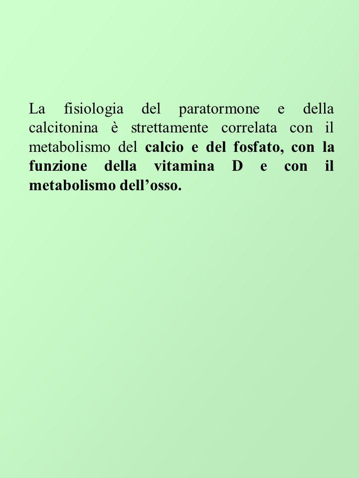 La fisiologia del paratormone e della calcitonina è strettamente correlata con il metabolismo del calcio e del fosfato, con la funzione della vitamina