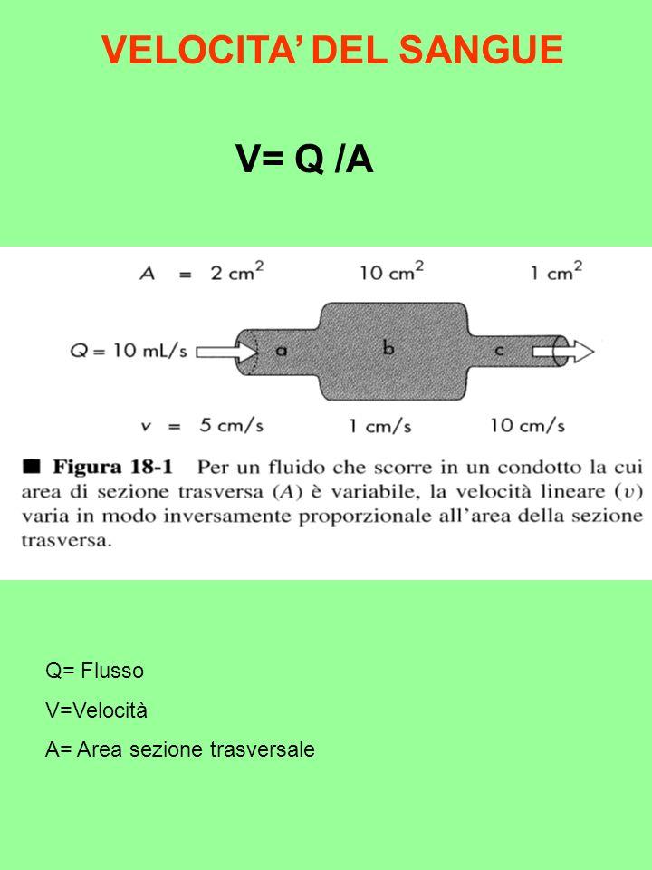 VELOCITA DEL SANGUE V= Q /A Q= Flusso V=Velocità A= Area sezione trasversale
