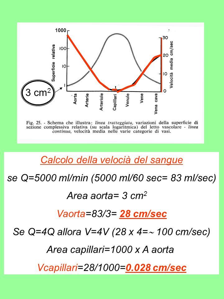 Calcolo della velocià del sangue se Q=5000 ml/min (5000 ml/60 sec= 83 ml/sec) Area aorta= 3 cm 2 Vaorta=83/3= 28 cm/sec Se Q=4Q allora V=4V (28 x 4= 100 cm/sec) Area capillari=1000 x A aorta Vcapillari=28/1000=0.028 cm/sec 1000 3 cm 2