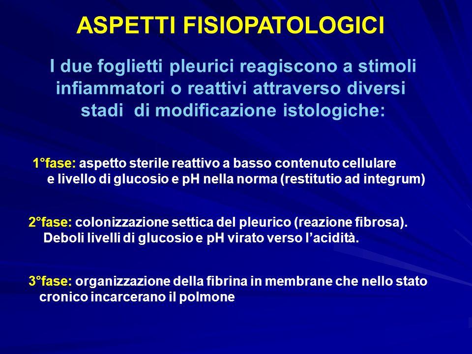 ASPETTI FISIOPATOLOGICI I due foglietti pleurici reagiscono a stimoli infiammatori o reattivi attraverso diversi stadi di modificazione istologiche: 1