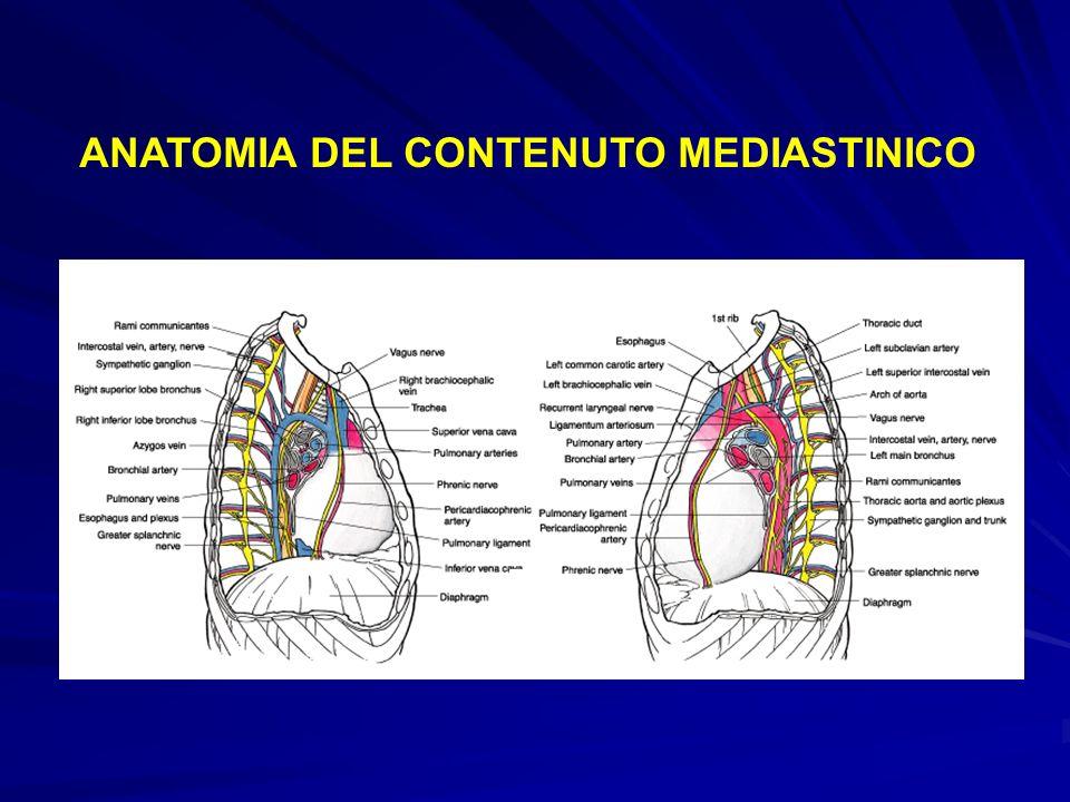 ANATOMIA DEL CONTENUTO MEDIASTINICO