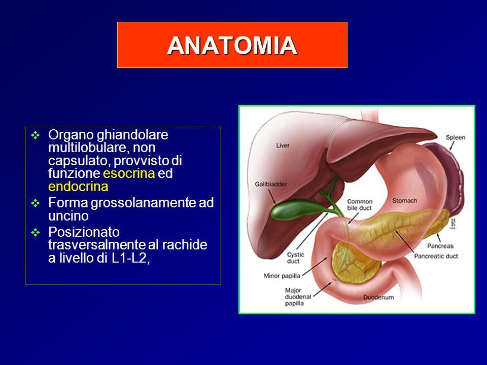 ANATOMIA Organo ghiandolare multilobulare, non capsulato, provvisto di funzione esocrina ed endocrina Forma grossolanamente ad uncino Posizionato tras
