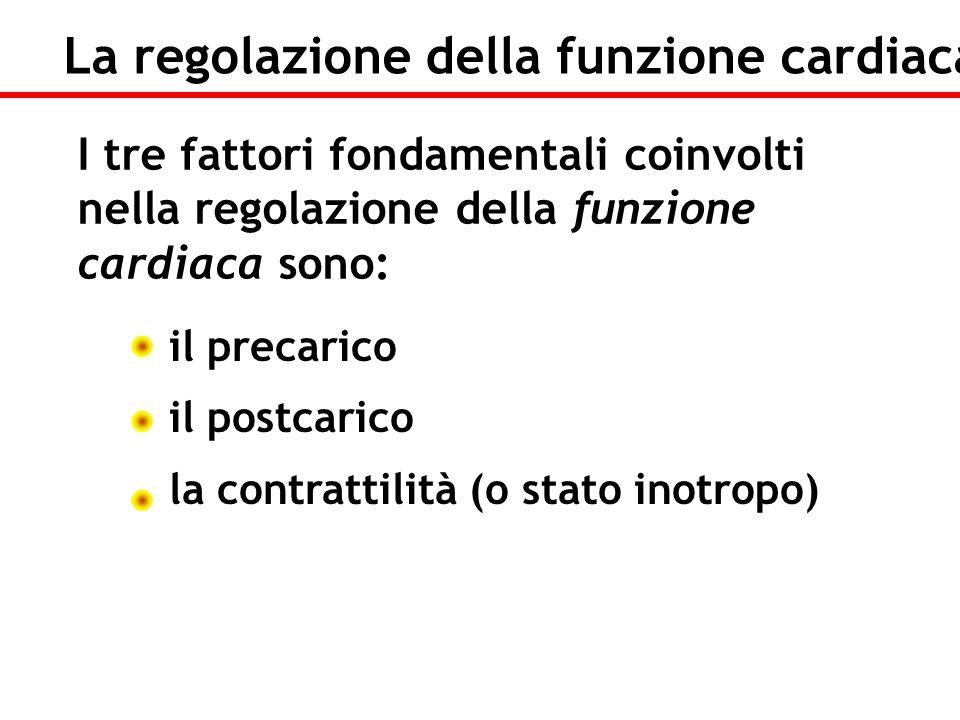 il precarico il postcarico la contrattilità (o stato inotropo) La regolazione della funzione cardiaca I tre fattori fondamentali coinvolti nella regol