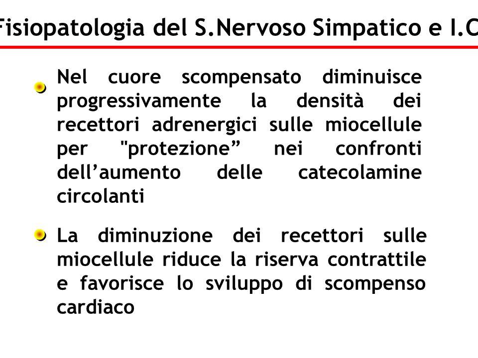 Nel cuore scompensato diminuisce progressivamente la densità dei recettori adrenergici sulle miocellule per