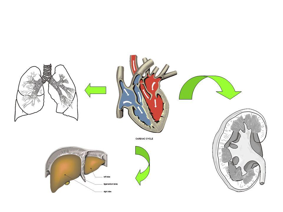 INSUFFICIENZA CARDIACA: fisiopatologia