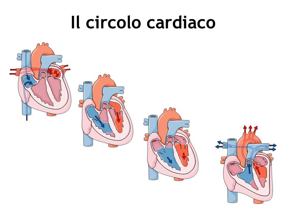 Disfunzione diastolica Consiste nellalterato riempimento delle cavità ventricolari che impedisce al cuore di disporre di una adeguata quantità di sangue da espellere.