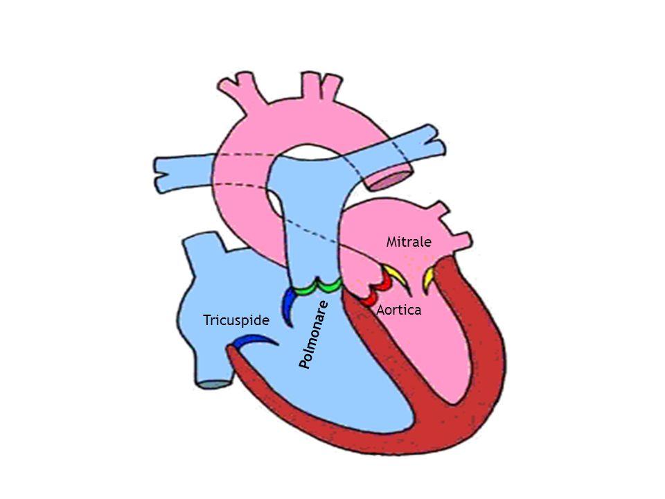 E indice della resistenza che si oppone al ventricolo in aorta e nellalbero arterioso e che il ventricolo deve superare per poter pompare il sangue in circolo.